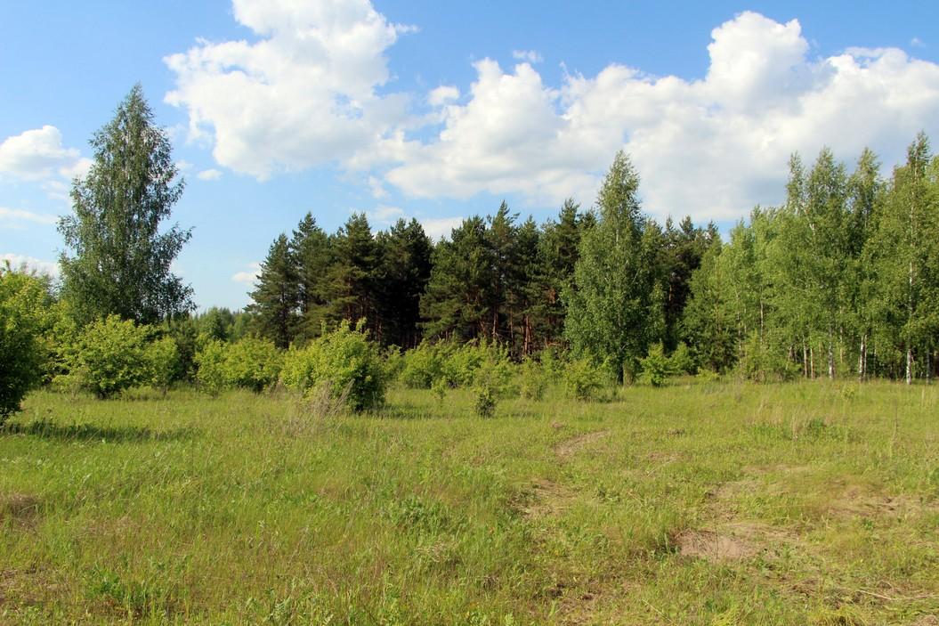 Лес без категории