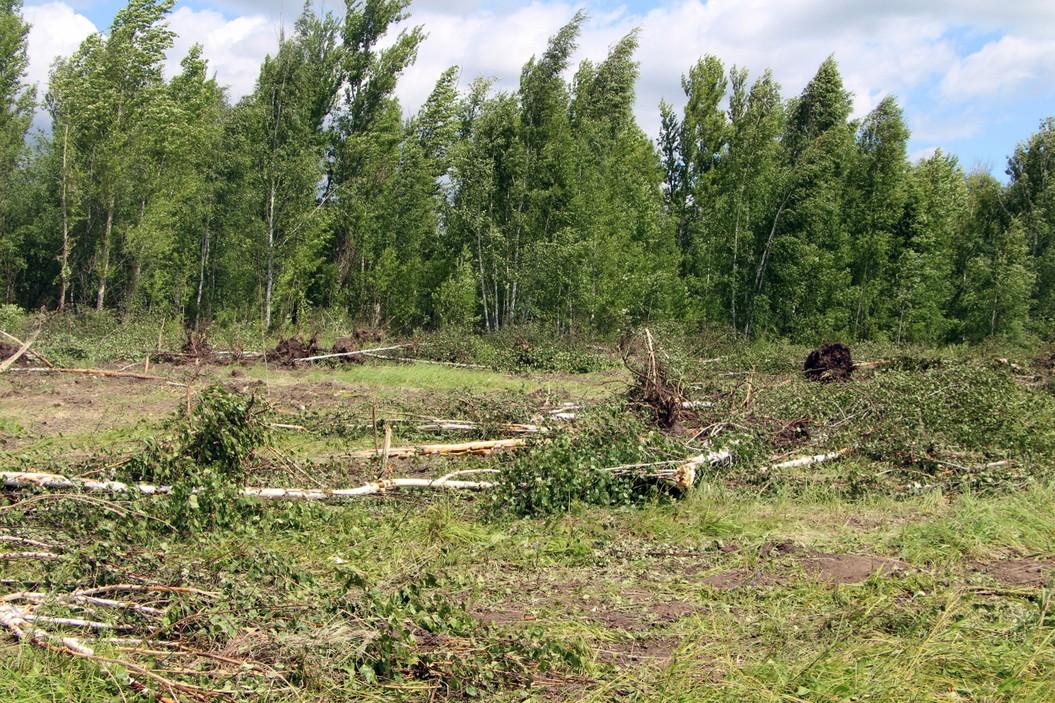 Выкорчеванные деревья