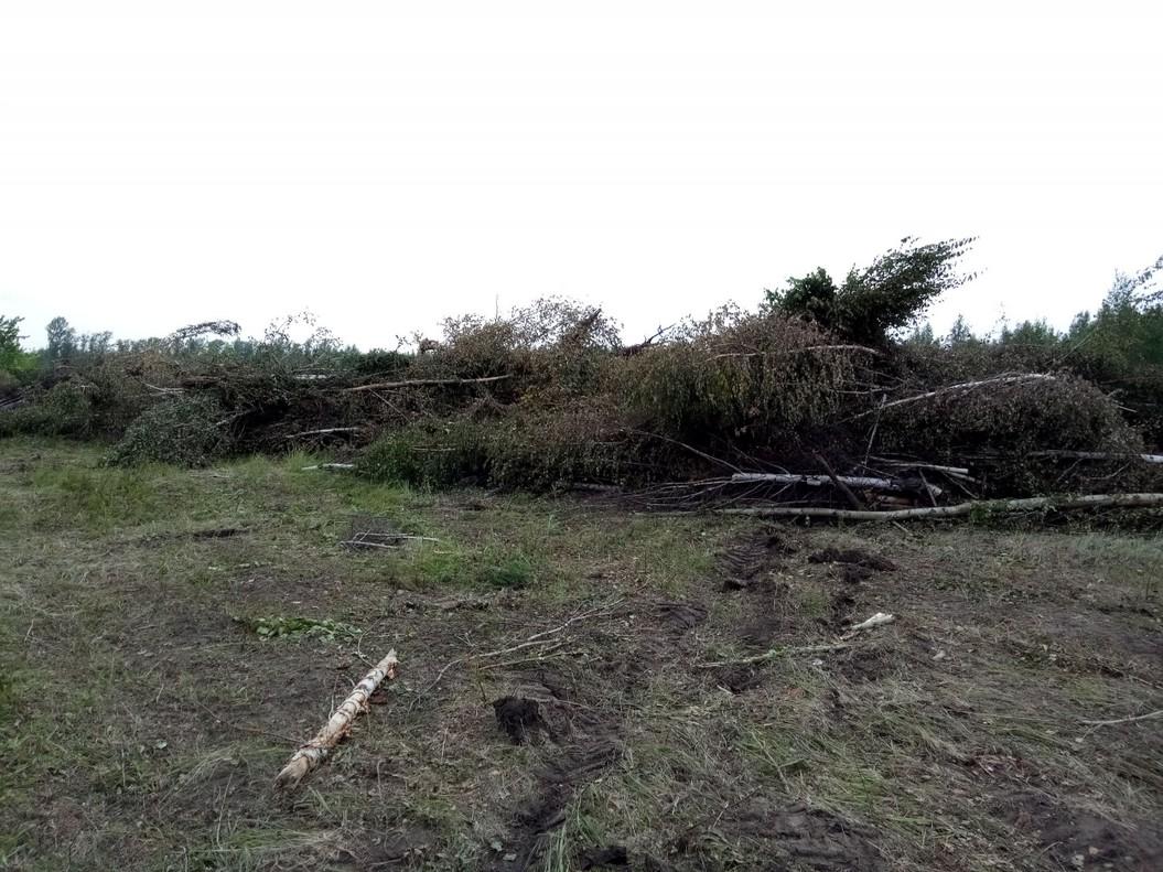 Свалка леса