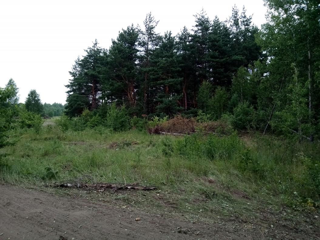 Лес куда тащили сваленные деревья